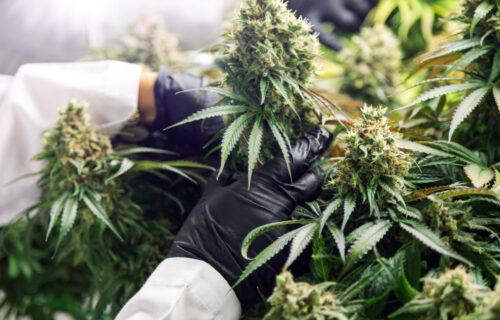 Voraussetzungen Anspruch des Versicherten auf Versorgung mit Cannabis