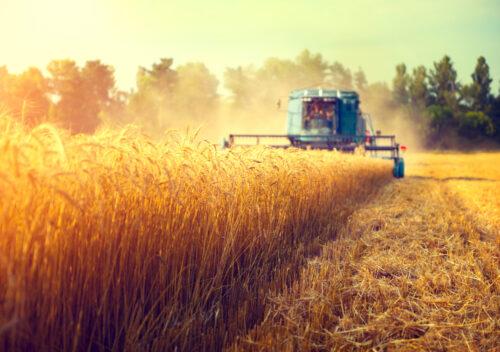 Werkvertragliche Fürsorgepflicht bei Beauftragung von Drescharbeiten auf Ackergrundstück